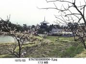 0001_0108 法起寺の塔を望む