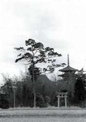 0007_0022 塔と斑鳩神社の鳥居
