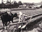 0040_0001 農作業